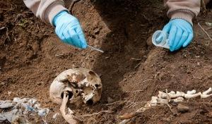 Mengambil serangga bukti dari mayat (sfu.museum)